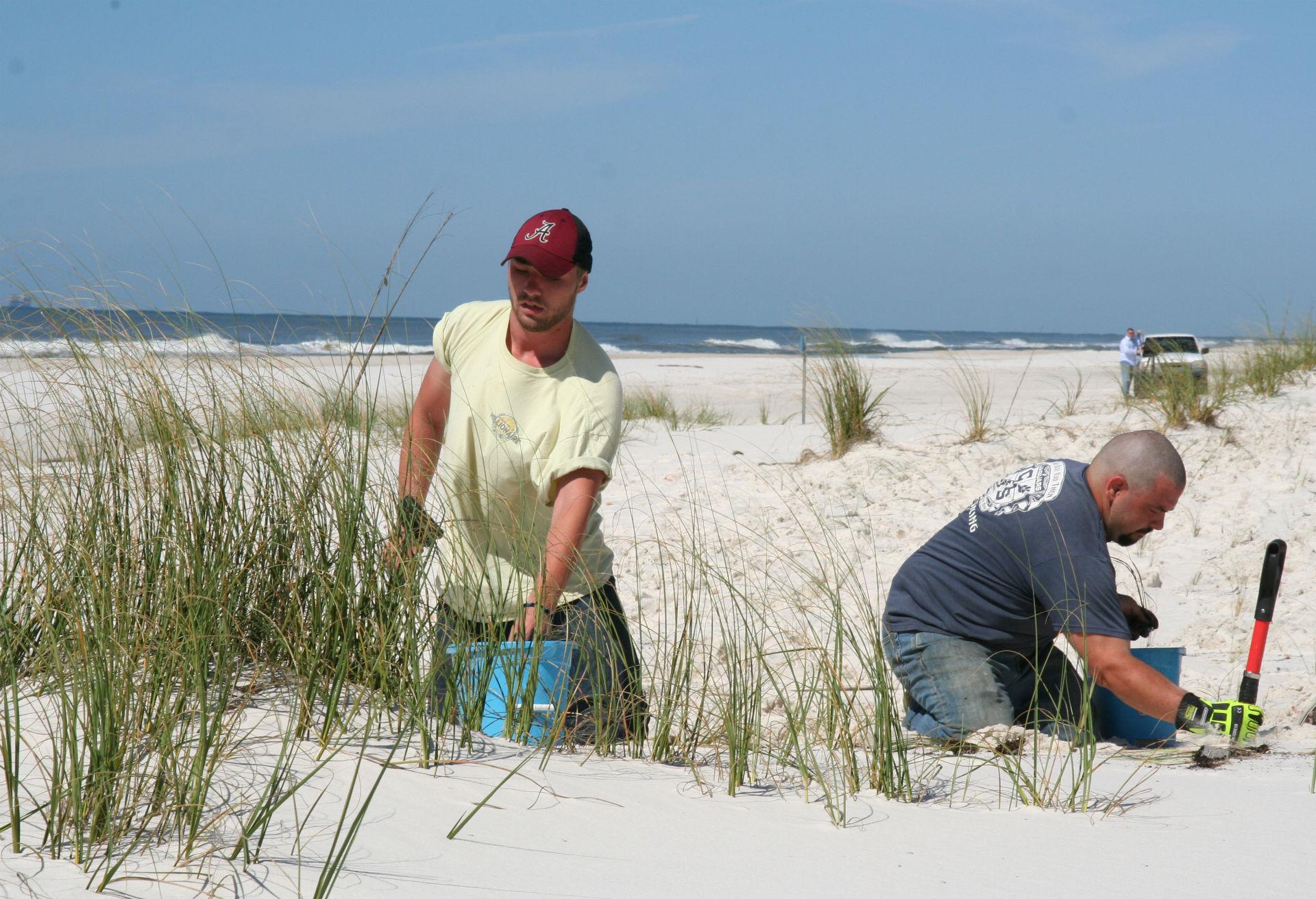 Gulf State Park Dune Restoration