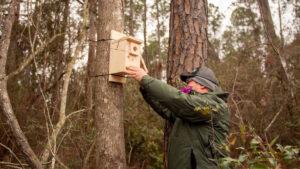Man installing bird house